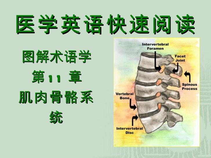 医学英语快速阅读 图解术语学 第 11 章 肌肉骨骼系统