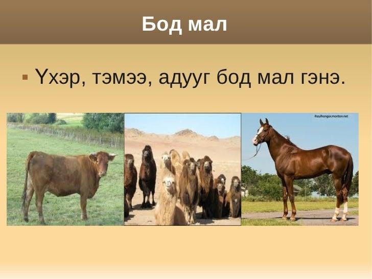 Бод мал   Үхэр, тэмээ, адууг бод мал гэнэ.