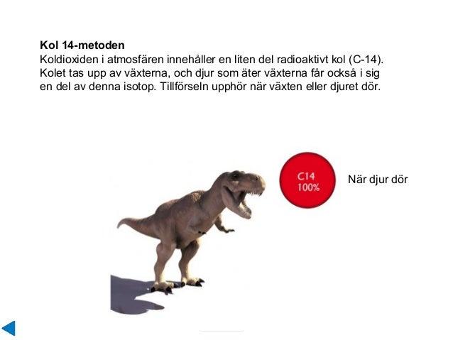 Kol 14-metoden Koldioxiden i atmosfären innehåller en liten del radioaktivt kol (C-14). Kolet tas upp av växterna, och dju...