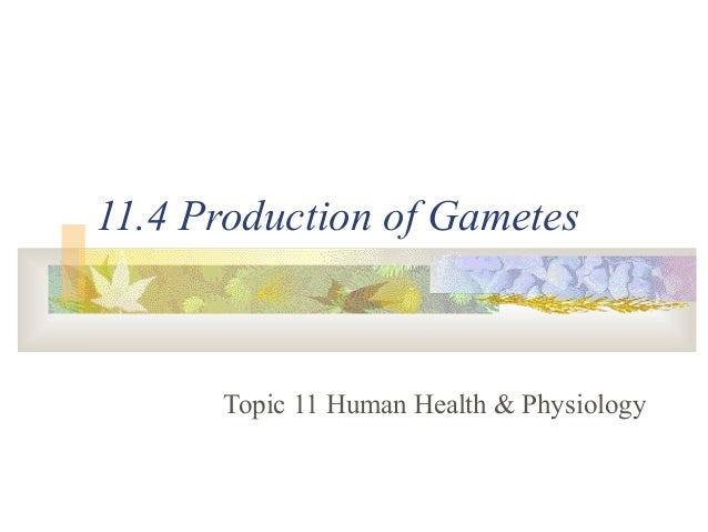 11.4 Production of Gametes Topic 11 Human Health & Physiology