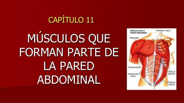 CAPÍTULO 11 MÚSCULOS QUE FORMAN PARTE DE LA PARED ABDOMINAL