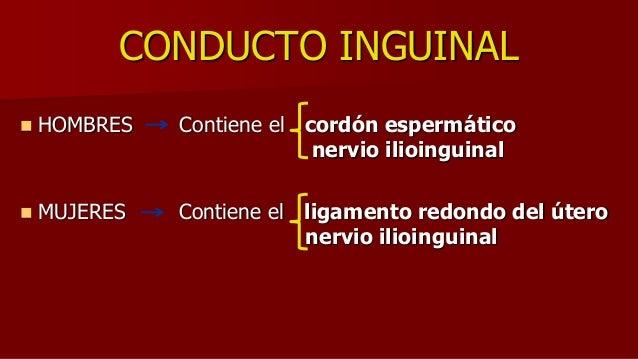 CONDUCTO INGUINAL  HOMBRES Contiene el cordón espermático nervio ilioinguinal  MUJERES Contiene el ligamento redondo del...