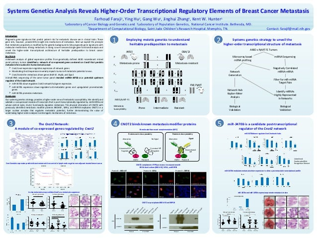 Systems Genetics Analysis Reveals Higher-Order Transcriptional Regulatory Elements of Breast Cancer Metastasis Farhoud Far...