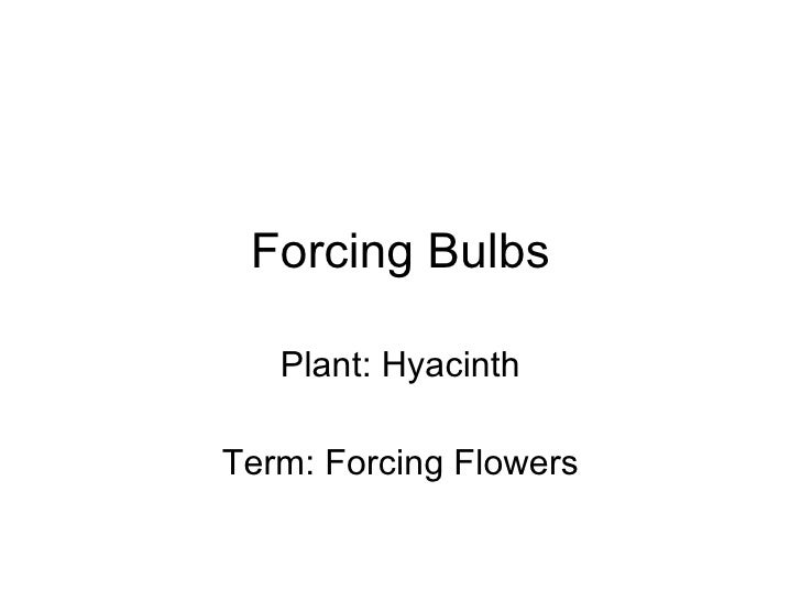Forcing Bulbs Plant: Hyacinth Term: Forcing Flowers