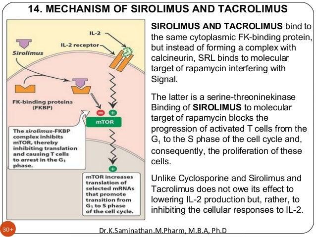 30+ 14. MECHANISM OF SIROLIMUS AND TACROLIMUS SIROLIMUS AND TACROLIMUS bind to the same cytoplasmic FK-binding protein, bu...