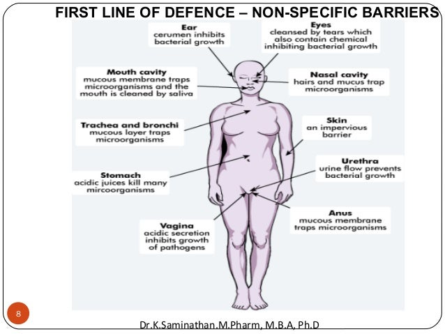 8 FIRST LINE OF DEFENCE – NON-SPECIFIC BARRIERS Dr.K.Saminathan.M.Pharm, M.B.A, Ph.D