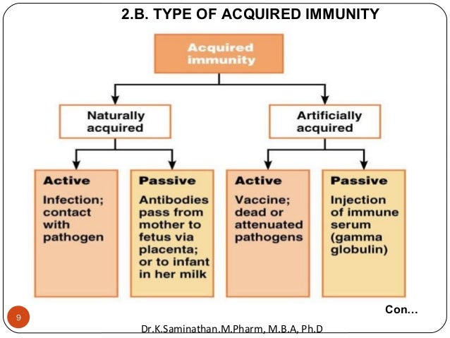 9 2.B. TYPE OF ACQUIRED IMMUNITY Con… Dr.K.Saminathan.M.Pharm, M.B.A, Ph.D