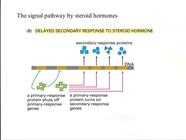 signal transduction - 41.5KB