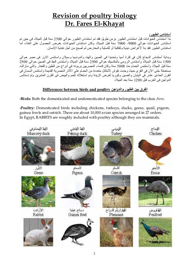 2 Revision of poultry biology Dr. Fares El-Khayat ر ا س أ: س أ أت اﻥ ار ا س ایا ﺡ ر ا...