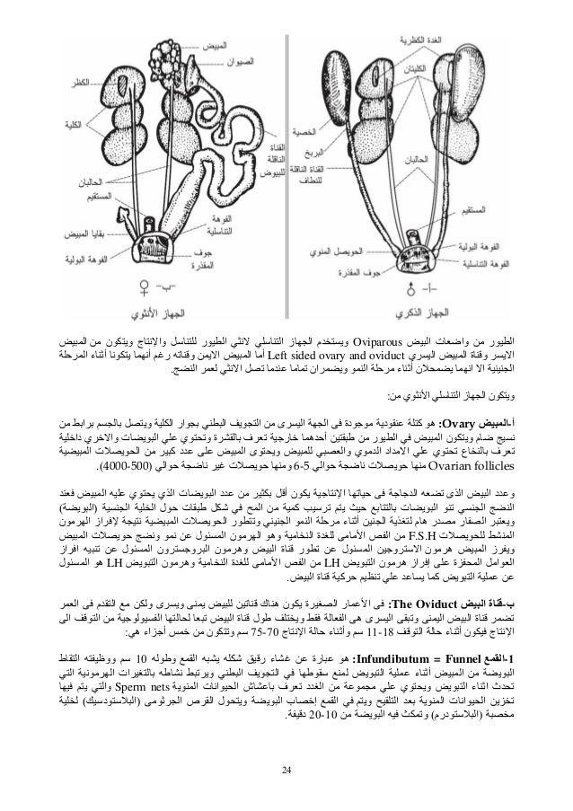 24 ر اا ت واﺽOviparousر ا ﻥ ا ز ا م وین وی ج ﻥ واا ي ا ا ة و ی اLeft s...