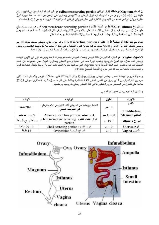 25 2-اMagnumاز إ أوض اAlbumen secreting portion:وی ر ا ا ة اء ا أآ ه 30–33ض ا از ا ...
