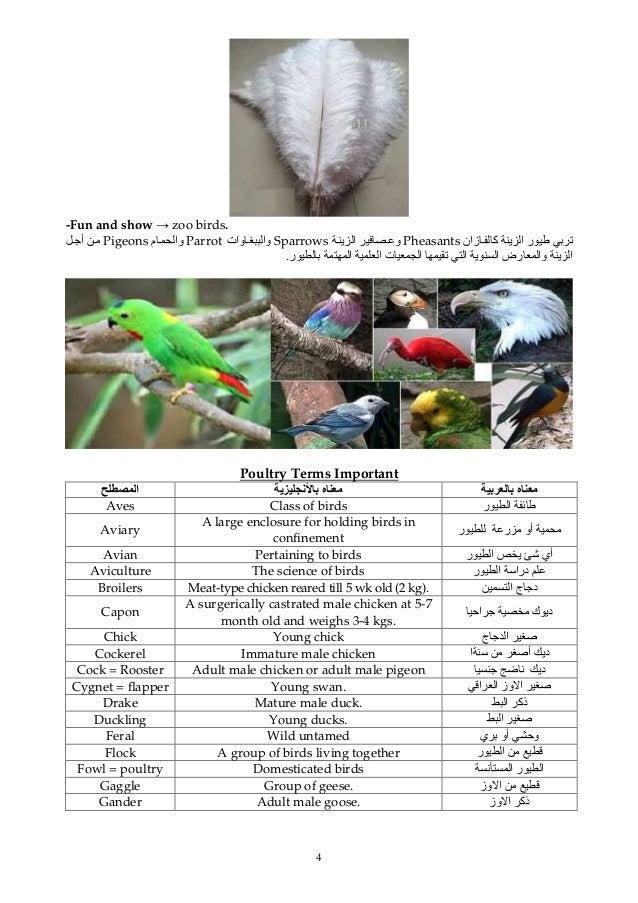 4 -Fun and show → zoo birds. ﺕزان آ ی ا رPheasantsی ا وSparrowsوات واParrotم واPigeonsأ ی ا...