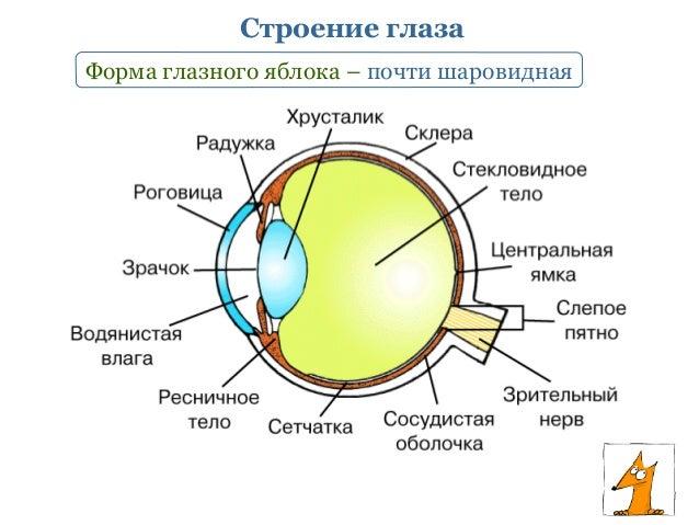 Коррекция зрения при тонкой роговиц