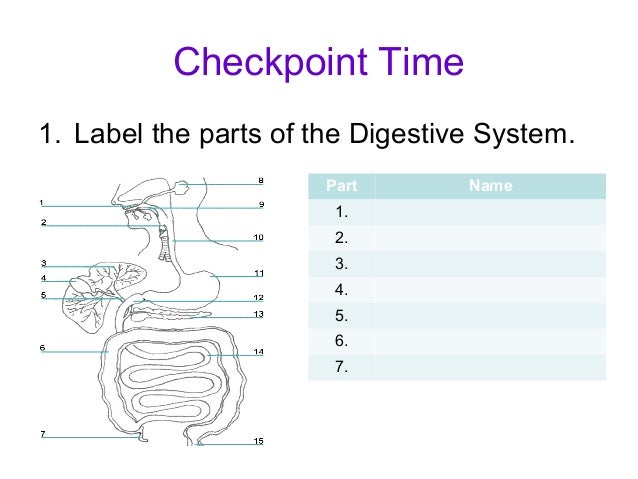 Digestive System Parts Diagram 15 - Electrical Work Wiring Diagram •