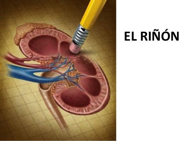 EL RIÑÓN