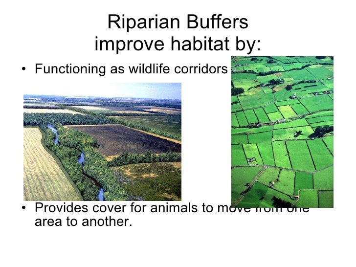 habitat fragmentation Editorial habitat fragmentation and biodiversity conservation: key findings and future challenges maxwell c wilson  xiao-yong chen  richard t corlett.
