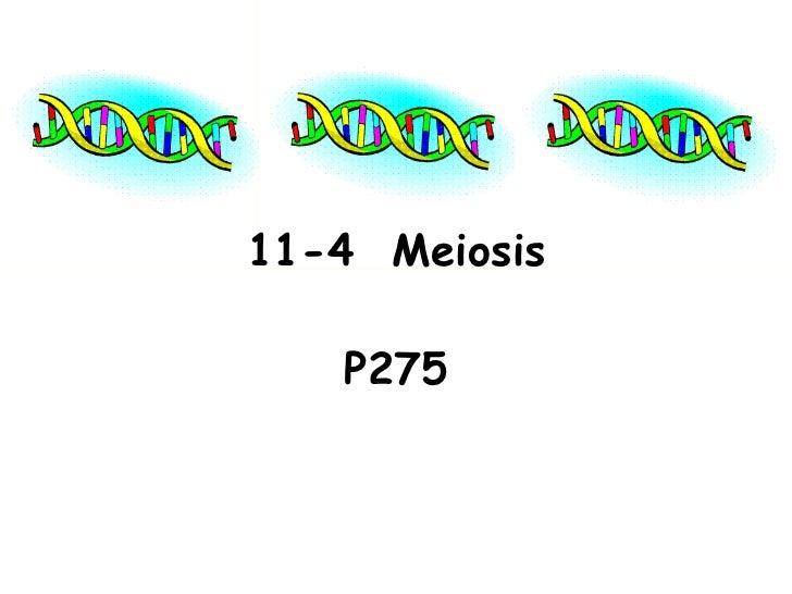 11-4 Meiosis   P275