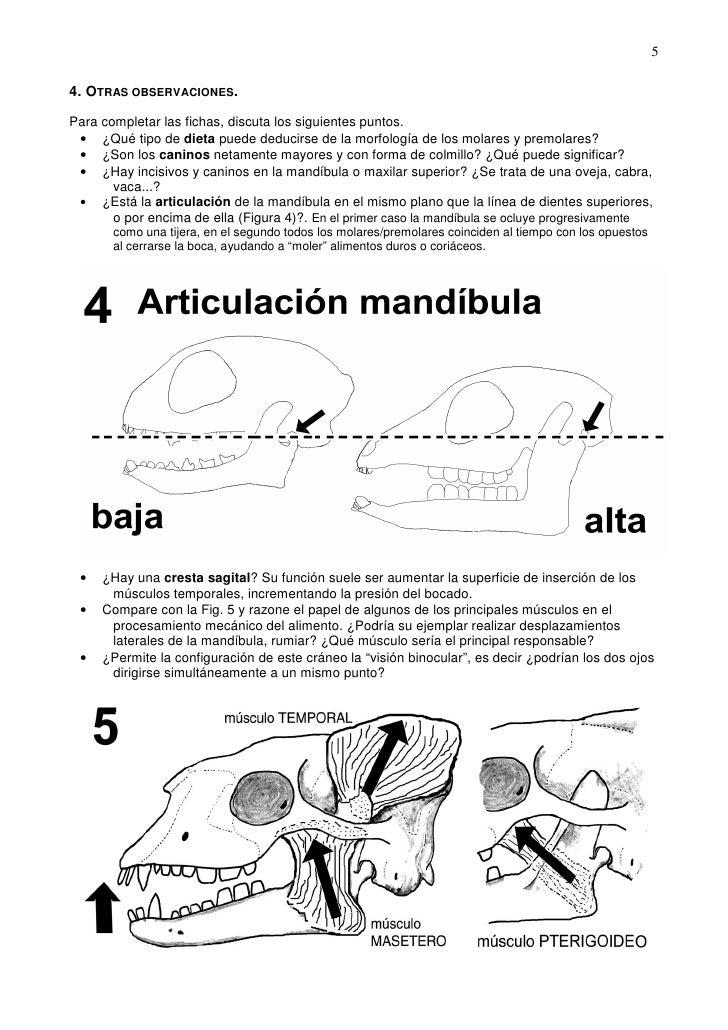 11. anatomia del craneo de mamiferos