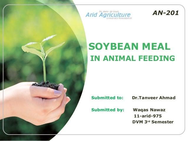 AN-201SOYBEAN MEALIN ANIMAL FEEDINGSubmitted to:   Dr.Tanveer AhmadSubmitted by:   Waqas Nawaz                11-arid-975 ...