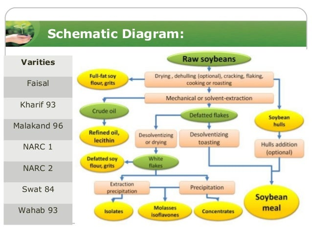 soybean processing diagram soybean meal in animal feeding-ppt