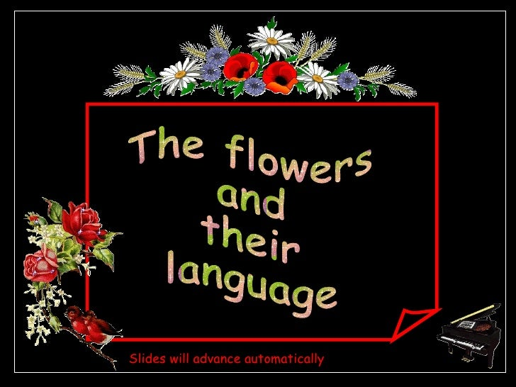 The flowers and their language Slides will advance automatically