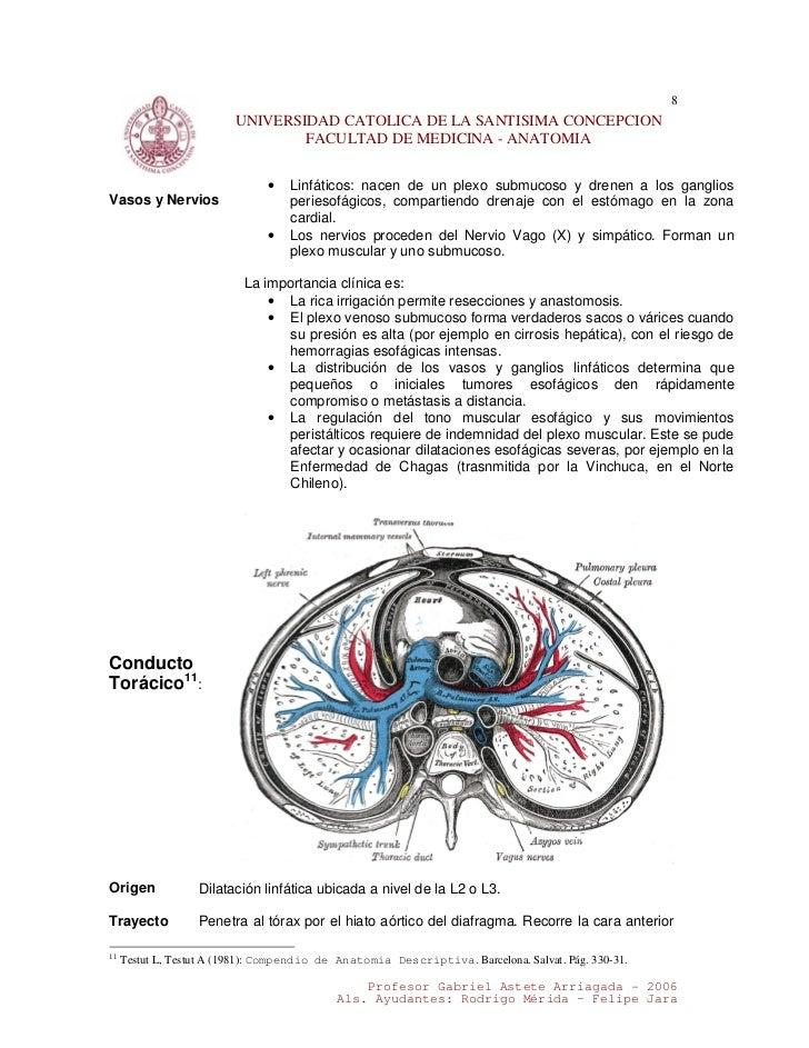 11. documento mediastino superior e inferior