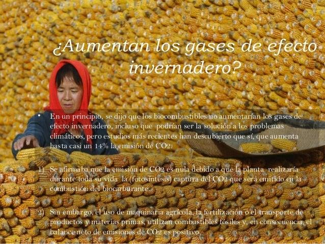 11 La Pol U00e9mica De Los Biocombustibles