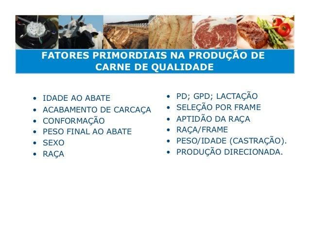 FATORES PRIMORDIAIS NA PRODUÇÃO DE             CARNE DE QUALIDADE•   IDADE AO ABATE          •   PD; GPD; LACTAÇÃO•   A...