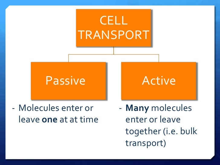 explain in detail why palisade cells Palisade cells show various adaptations are 1 their cylindrical shape, which allows maximum absorption of light by chloroplasts 2these cells produce carbohydrates in greater quantities than are needed by each cell these carbohydrates are fed i.