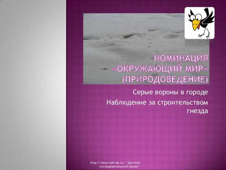Номинация «Окружающий мир» (Природоведение)<br />Серые вороны в городе<br />Наблюдение за строительством гнезда<br />http:...