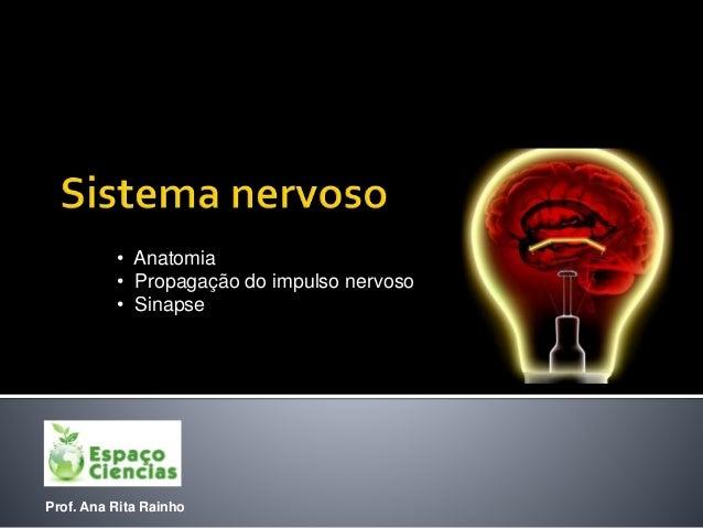 Prof. Ana Rita Rainho • Anatomia • Propagação do impulso nervoso • Sinapse