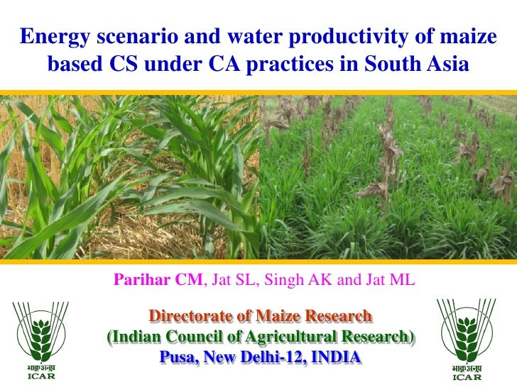 Energy scenario and water productivity of maize  based CS under CA practices in South Asia         Parihar CM, Jat SL, Sin...