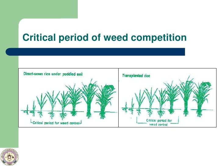 Effect Of Establishment Method And Tillage Of Rice And