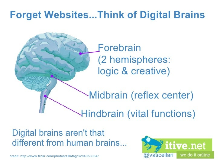 @vascellari Forget Websites...Think of Digital Brains Digital brains aren't that different from human brains... Hindbrain ...