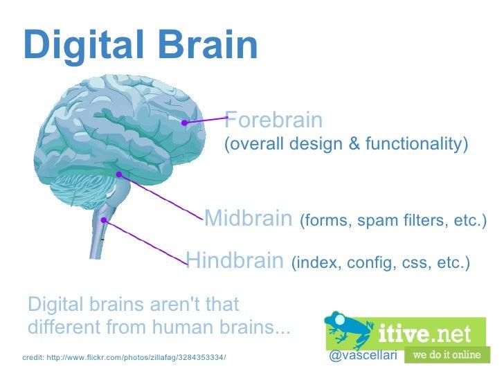 @vascellari DigitalBrain Digital brains aren't that different from human brains... Hindbrain   (index, config, css, etc.)...