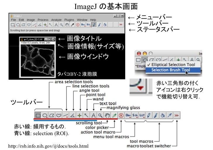 ImageJ の基本画面                                             ← メニューバー                                             ← ツールバー     ...