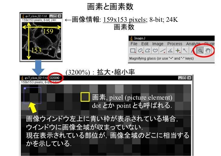 画素と画素数            ←画像情報: 159x153 pixels; 8-bit; 24K                      画素数      159153            (3200%) : 拡大・縮小率      ...