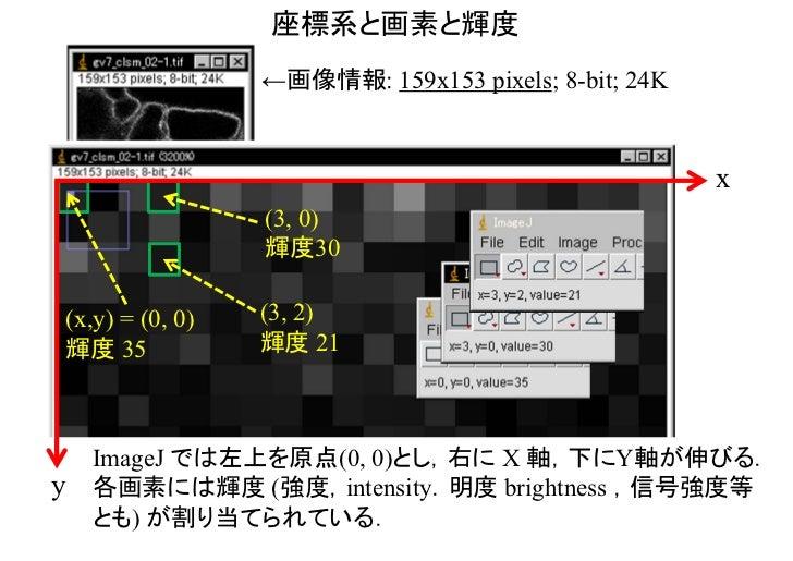 座標系と画素と輝度                     ←画像情報: 159x153 pixels; 8-bit; 24K                                                         x ...