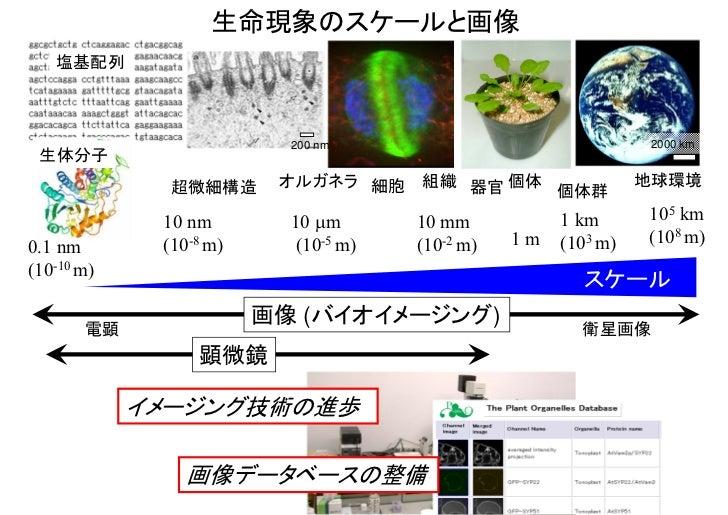 生命現象のスケールと画像   塩基配列                          200 nm                                2000 km 生体分子              超微細構造      オル...