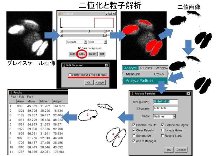 二値化と粒子解析   二値画像グレイスケール画像