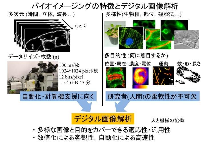 バイオイメージングの特徴とデジタル画像解析多次元 (時間,立体,波長…)                 多様性(生物種,部位,観察法…)                  t, z, データサイズ・枚数 (n)               ...