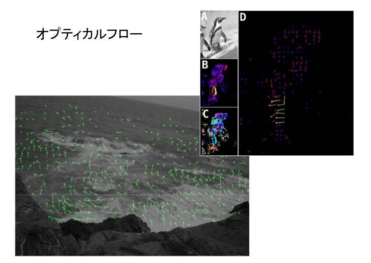 動き解析のためのオプティカルフロー法                                            Plugins - kbi - Kbi_Flow シロイヌナズナ胚軸表皮 小胞体CSU, EM-CCD, 50 ms *...