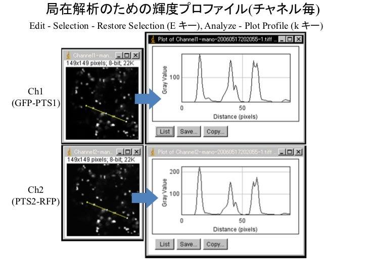 輝度プロファイルは輝度の空間分布を示す  GFP-PTS1山の高さは輝度(蛍光)の強さ,山の幅は輝度の広がりを示すが,実際の大きさと関係ないことがある(分解能より小さい場合等)ので要注意.半値全幅(半値幅, FWHM, full width a...
