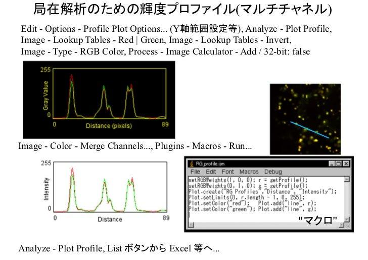 局在解析のための輝度プロファイルの例    (アクチン繊維と液胞膜)      Higaki et al. (2006) Plant Cell Physiol 47: 839-852