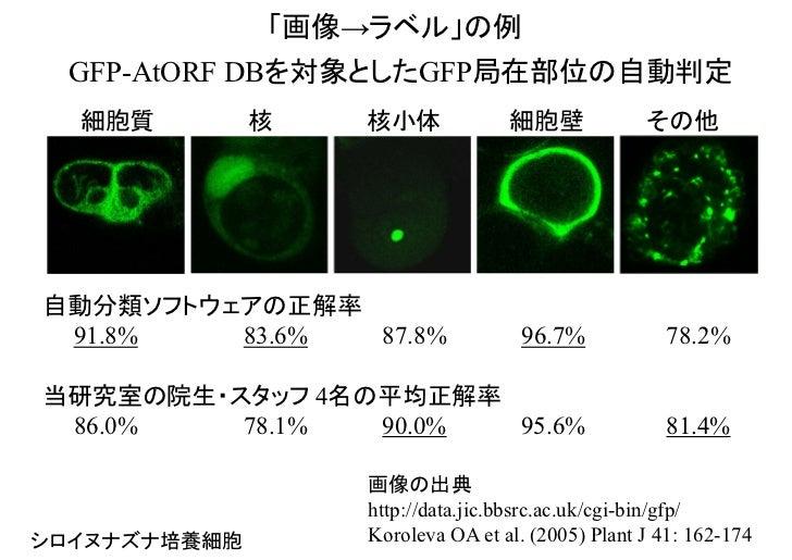 「画像→ラベル」の例 GFP-AtORF DBを対象としたGFP局在部位の自動判定  細胞質         核   核小体             細胞壁             その他自動分類ソフトウェアの正解率 91.8%   83.6%...
