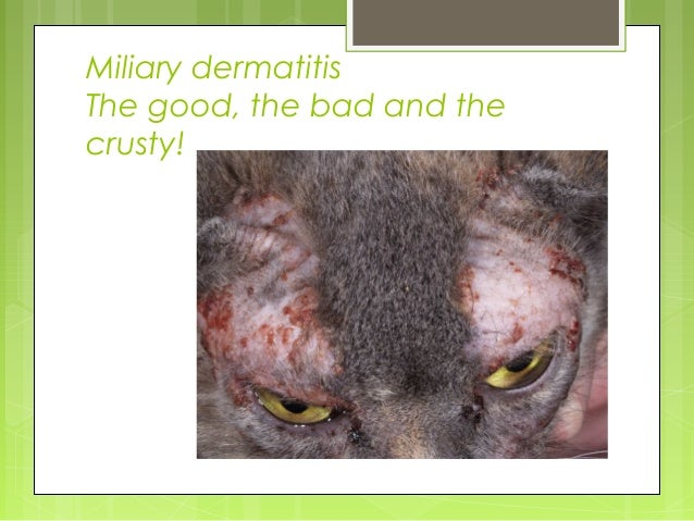 Diagnosis & Management of the Allergic Cat, Dr. Michelle Tranchina, 1…