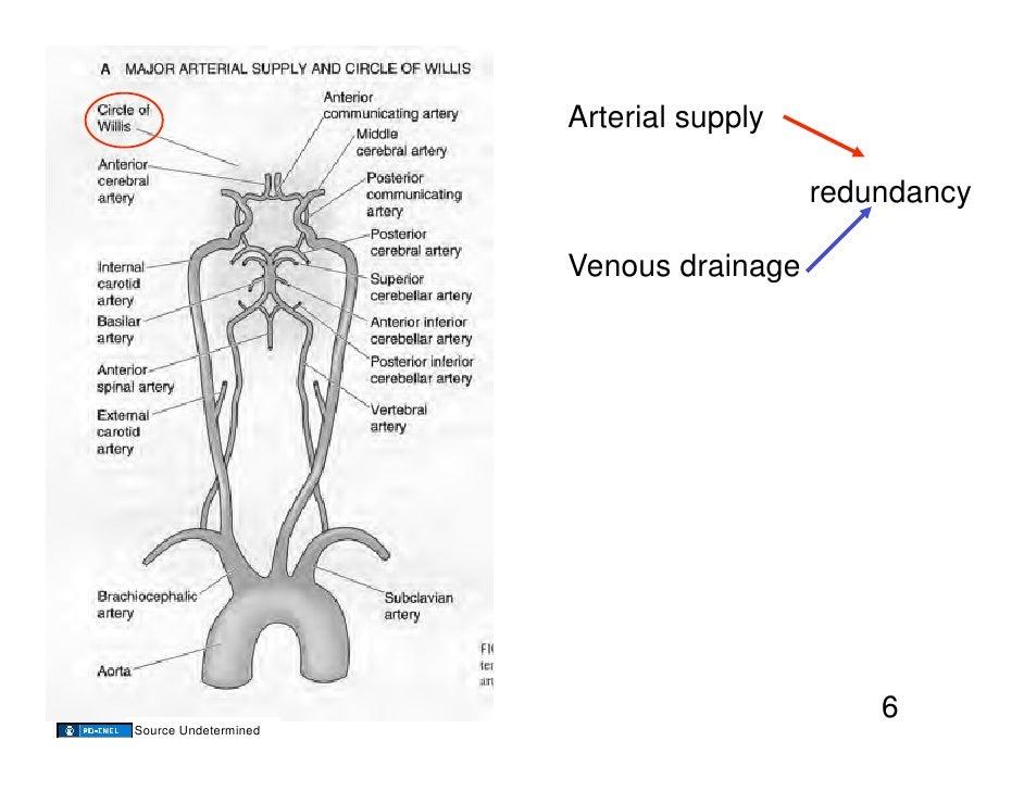 11.10.08(a): Cerebral Blood Flow