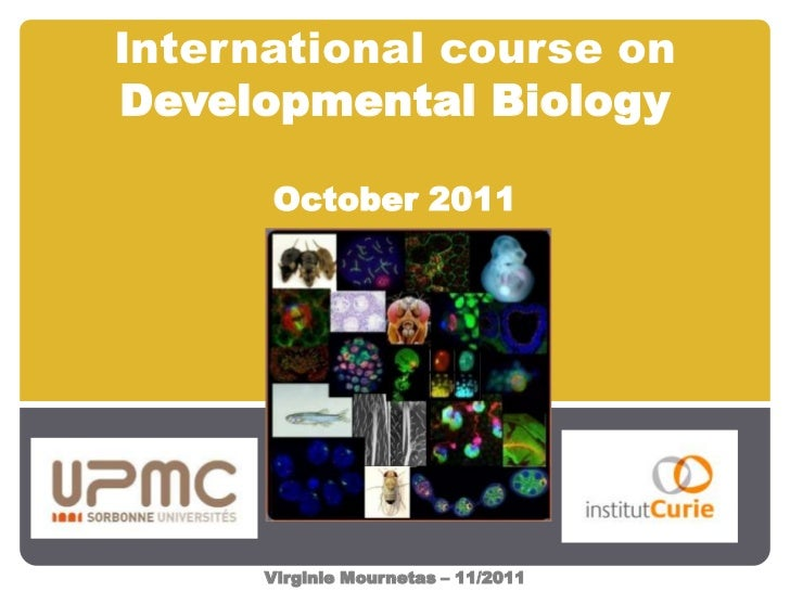International course onDevelopmental Biology      October 2011      Virginie Mournetas – 11/2011