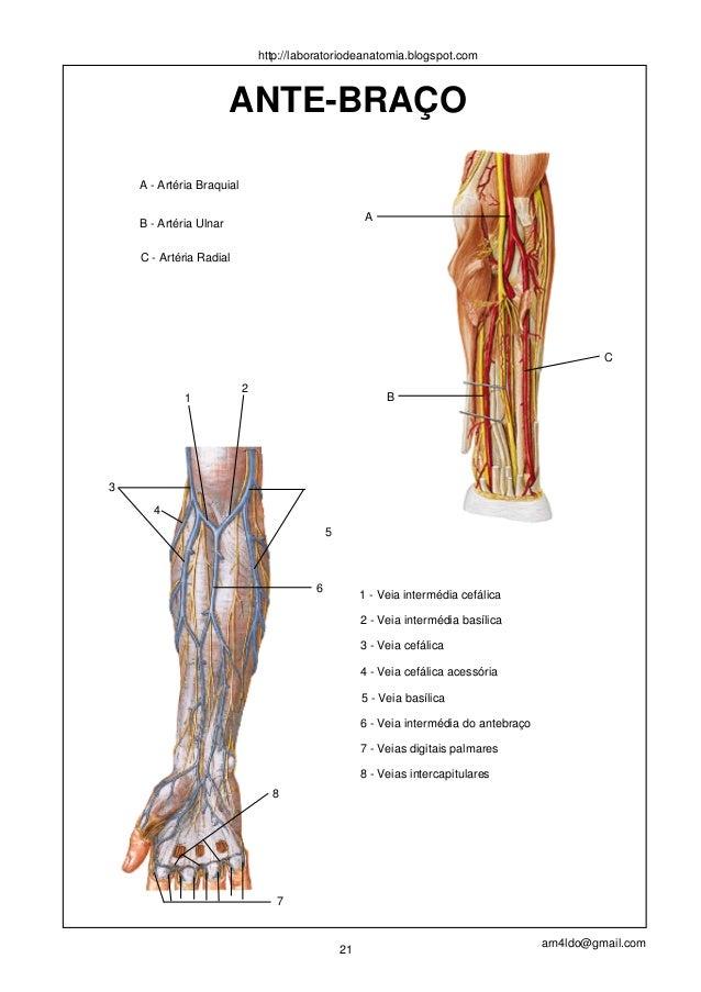 Excepcional Anatomía Del Sistema Vascular Modelo - Imágenes de ...