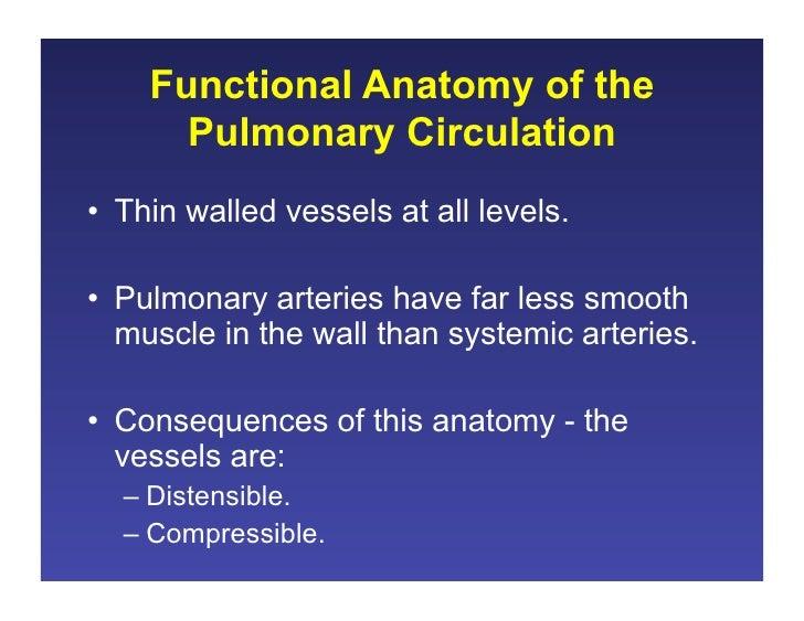 111708c Pulmonary Blood Flow
